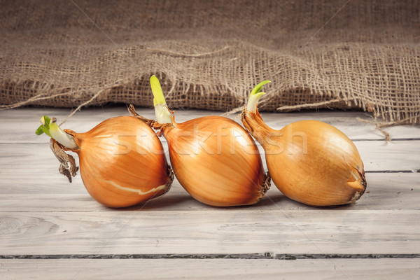 Onions on a row Stock photo © Sportactive
