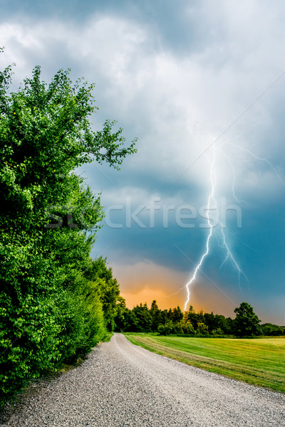 thunder and lightning hits trees Stock photo © Sportactive