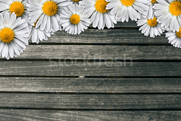 Marguerites on a dark wood background Stock photo © Sportactive