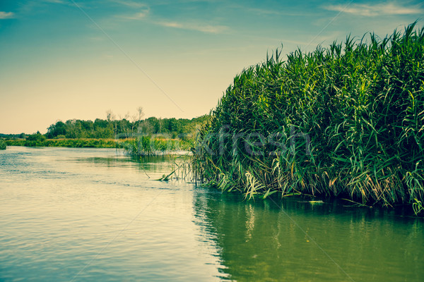 Green rushes by the lake Stock photo © Sportactive
