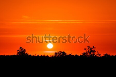 Countryside sunset in dark red color Stock photo © Sportactive