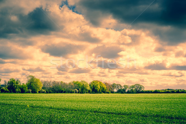 Dark clouds over a field Stock photo © Sportactive
