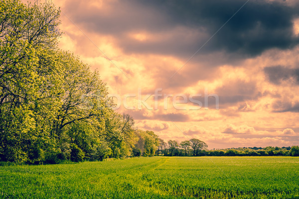 Trees in a cloudy landscape Stock photo © Sportactive