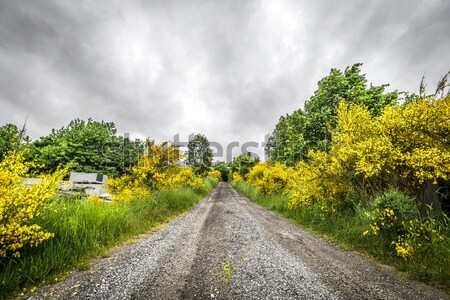 Sunshine over a nature path Stock photo © Sportactive