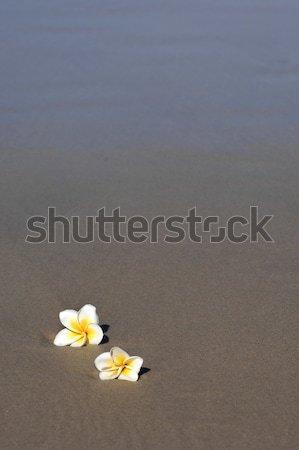 Tengerpart virágok kettő homok óceánok perem Stock fotó © Sportlibrary