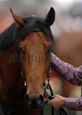Ló fej verseny messze versenyző Stock fotó © Sportlibrary