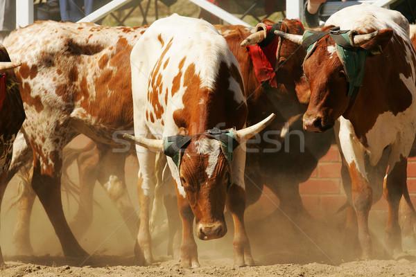 Rodeo anello tardi pomeriggio sport animale Foto d'archivio © Sportlibrary