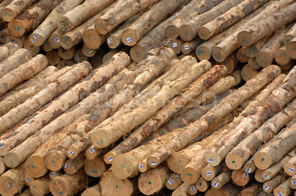 A pile a logs (timber) waits at a mill for chipping. Stock photo © Sportlibrary