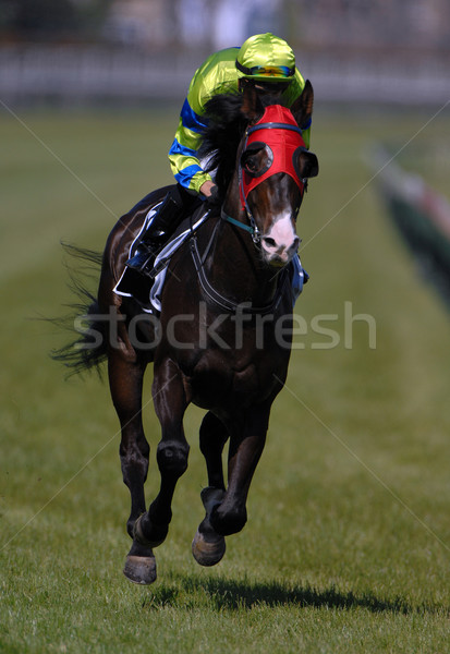 レース 馬 アクション ストックフォト © Sportlibrary