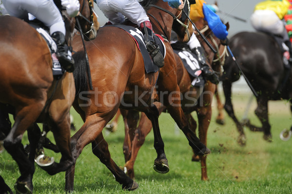 Horseracing Stock photo © Sportlibrary