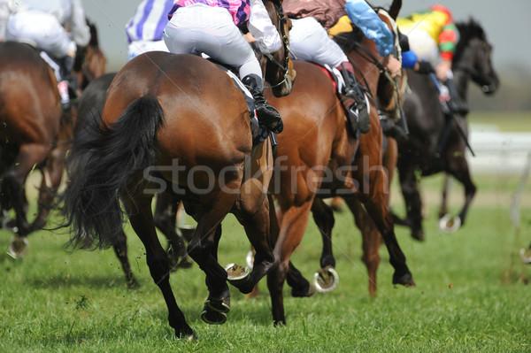 Campo cavalli cavallo muscolare velocità gara Foto d'archivio © Sportlibrary