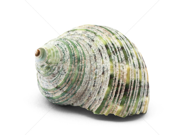 Shell isolated on white Stock photo © sqback