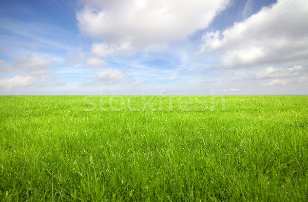 Green grass field with bright blue sky  Stock photo © sqback