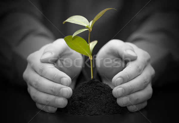 Small plant protected by hands Stock photo © sqback