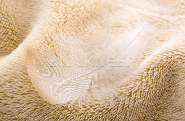 Feather on fabric Stock photo © sqback