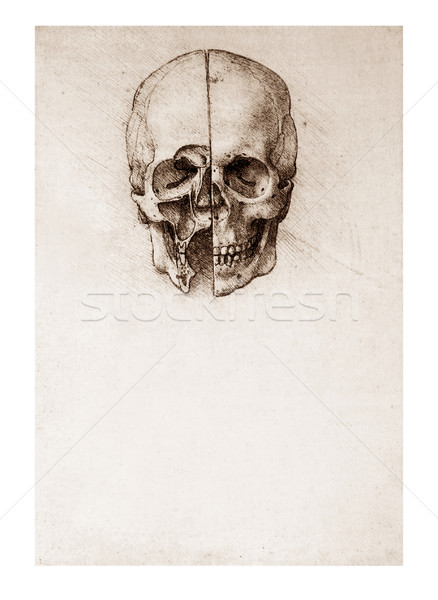 Sketched skull by Leonardo Da Vinci Stock photo © sqback