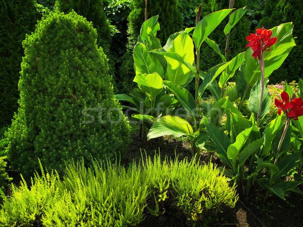 summer flower garden Stock photo © SRNR