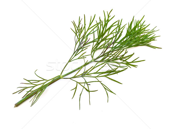 The photo of the green dill at the white background Stock photo © SRNR