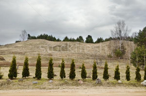 деревья дороги мрачный небе Сток-фото © SRNR