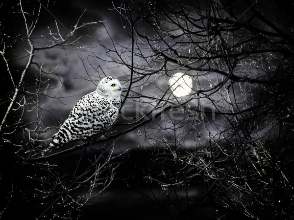 Halloween noite lua coruja nublado escuro Foto stock © SRNR