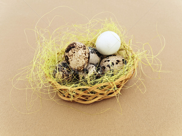 quial eggs Stock photo © SRNR