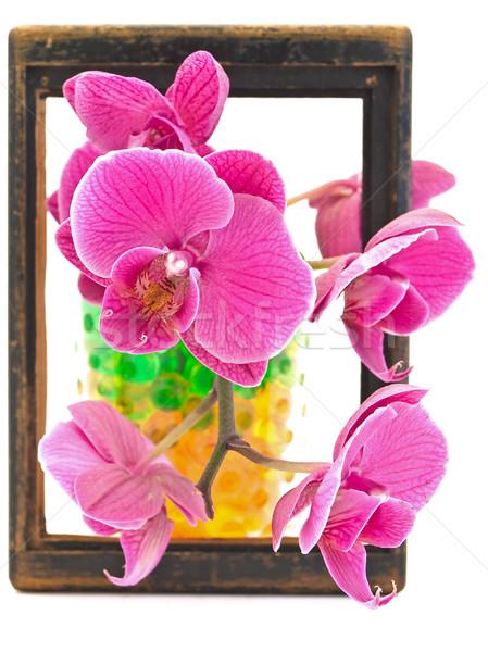 flowers in the frame Stock photo © SRNR