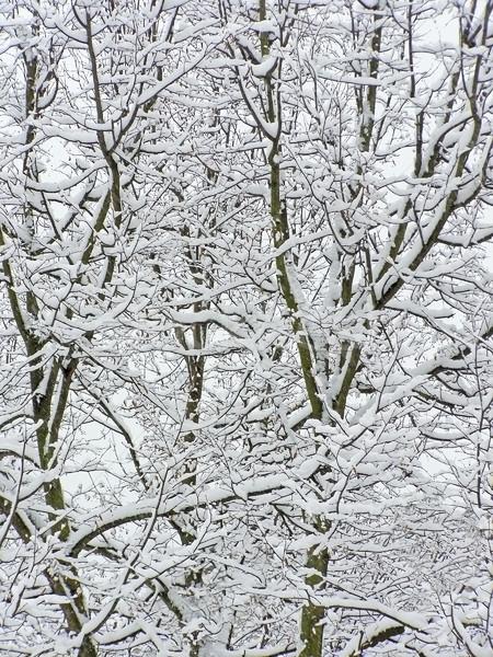 снега дерево покрытый первый природы Сток-фото © SRNR