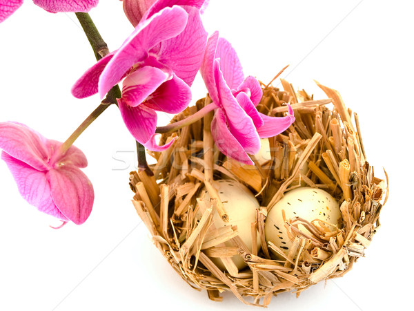 Bird Nest and Orchid Stock photo © SRNR