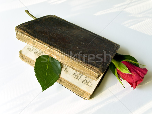 Red rose in the old book at the white sun lighted table Stock photo © SRNR
