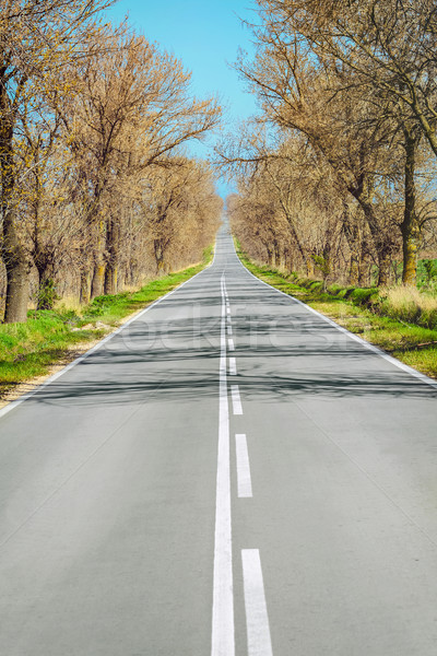 Road in Early Spring Stock photo © SRNR