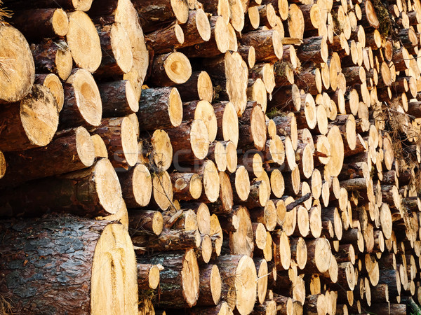 logs in the forest Stock photo © SRNR