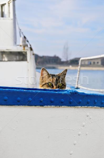 Sailor Cat  Stock photo © SRNR
