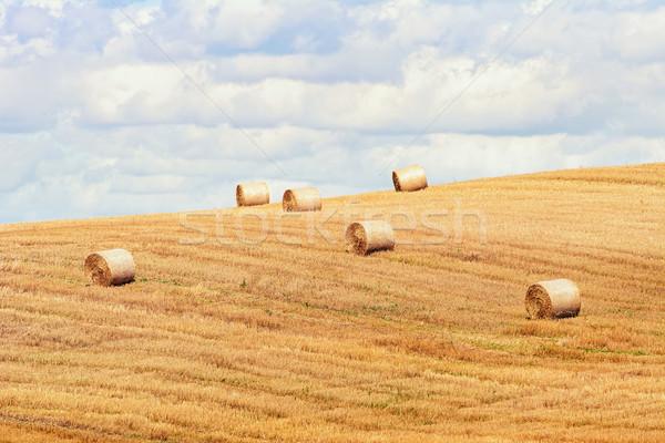 Veld Litouwen natuur land gazon landbouw Stockfoto © SRNR