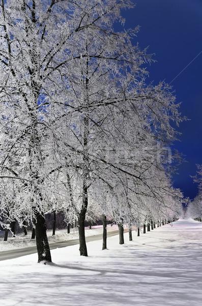 Winter Alley Stock photo © SRNR