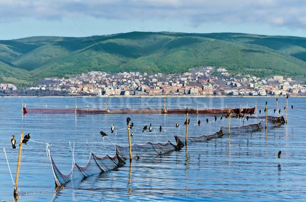 Cormorants on fishnets Stock photo © SRNR