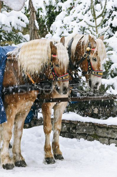 Christmas Horses Stock photo © SRNR