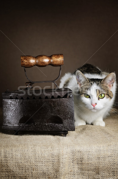 Cat And Iron Stock photo © SRNR