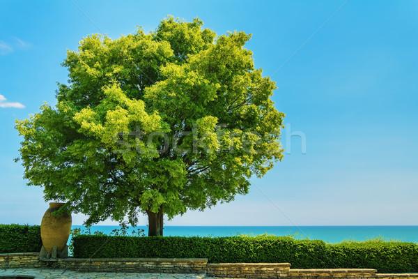 árvore vegetação exuberante blue sky céu verde folhas Foto stock © SRNR