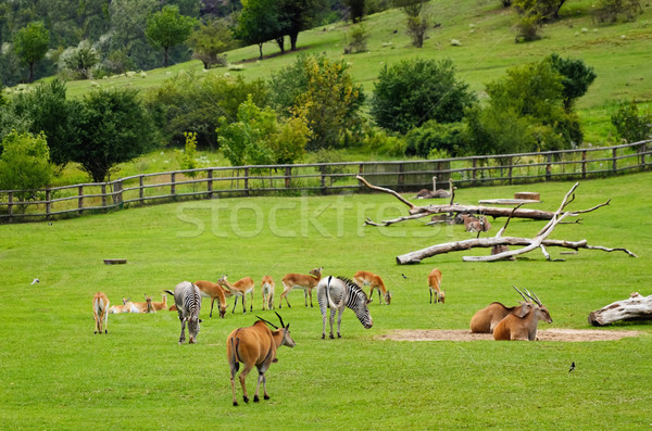 Pasture Stock photo © SRNR