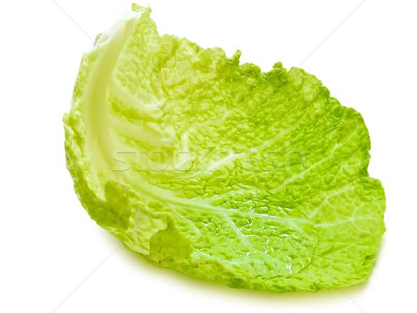 cabbage leaf Stock photo © SRNR