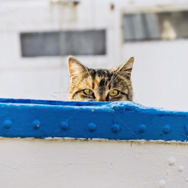Cat On Board Stock photo © SRNR