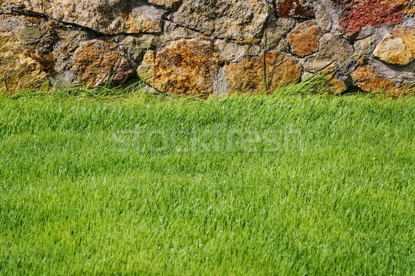 Green Lawn Stock photo © SRNR