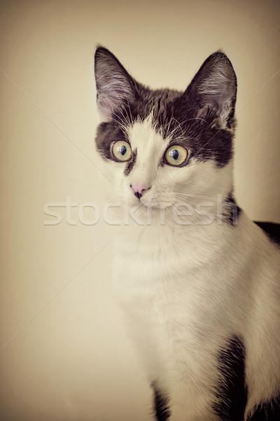 Stock photo: Black and White Cat