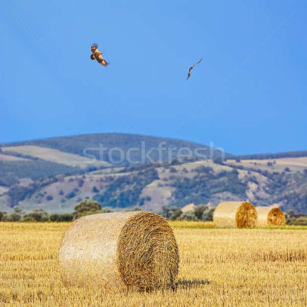 Alan tepeler sanayi dağlar tarım arazi Stok fotoğraf © SRNR