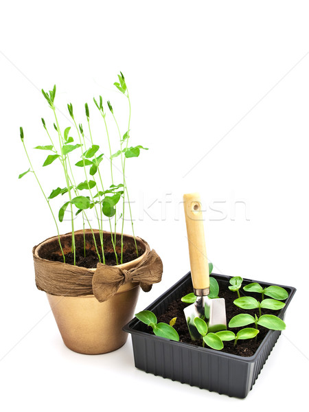 Gardening Stock photo © SRNR
