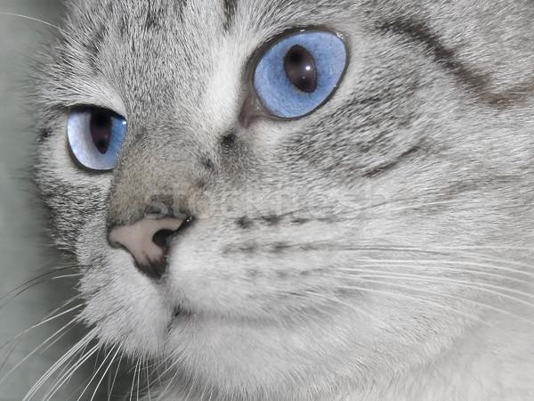 Kat ogen snuit oog natuur Stockfoto © SRNR