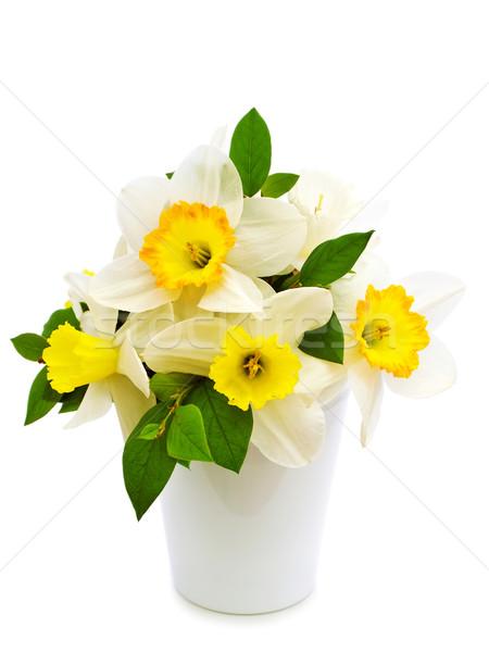narcissus bouquet Stock photo © SRNR