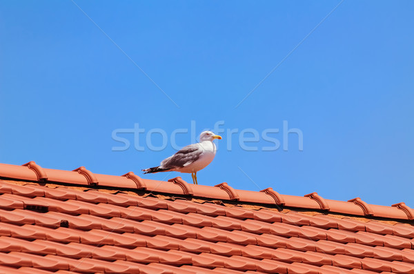 Seagull on the Roof Stock photo © SRNR