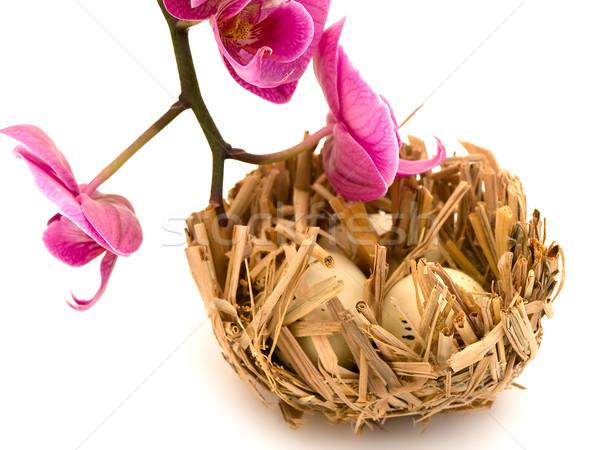 鳥の巣 蘭 3  卵 ピンク 花 ストックフォト © SRNR
