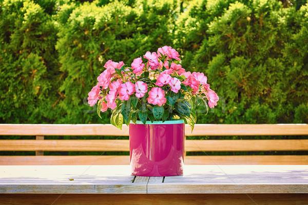 Virágok virágcserép természet edény virág virágmintás Stock fotó © SRNR